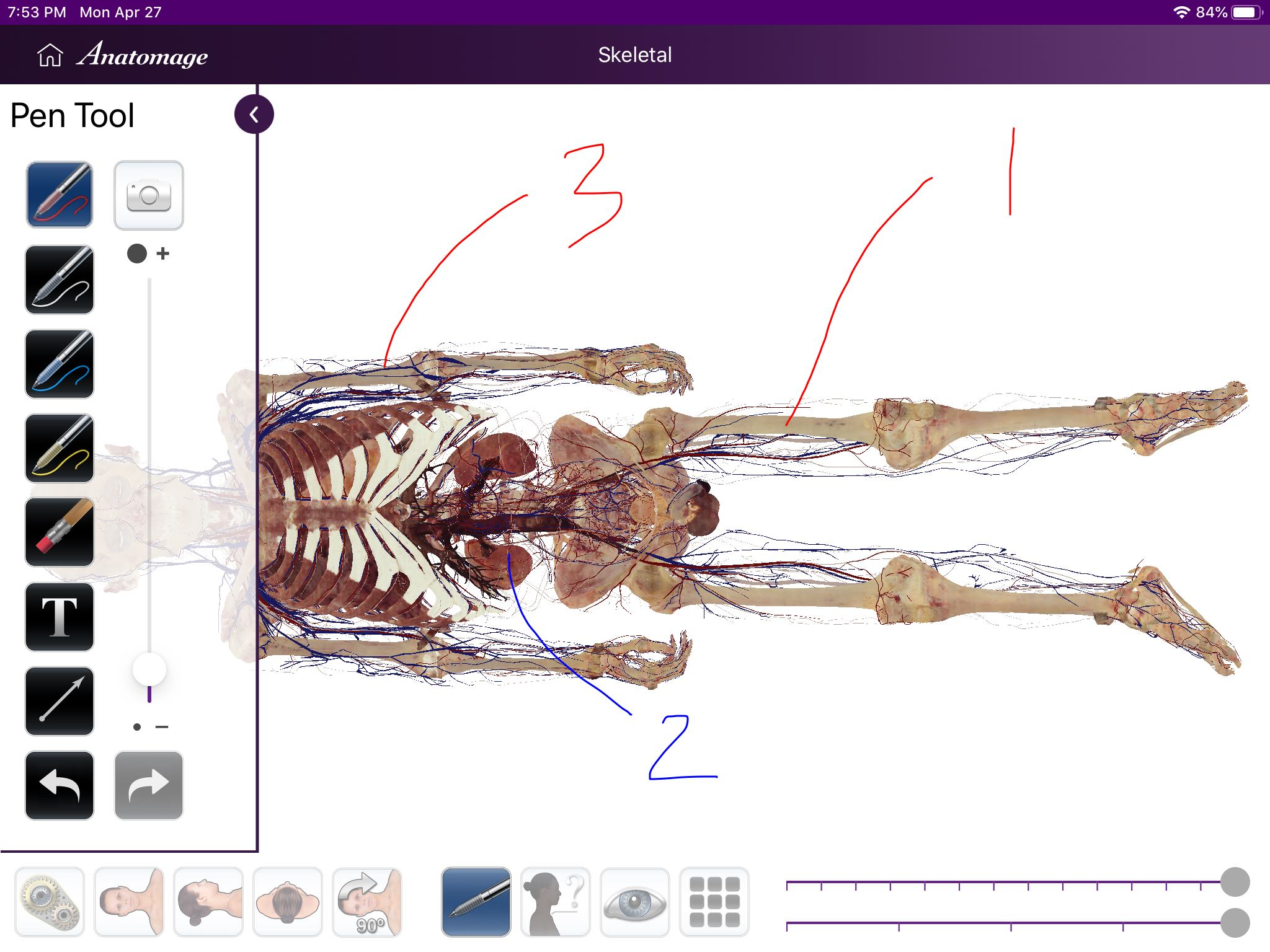 Anatomage 最新 iPad app - Anatomage Table Companion